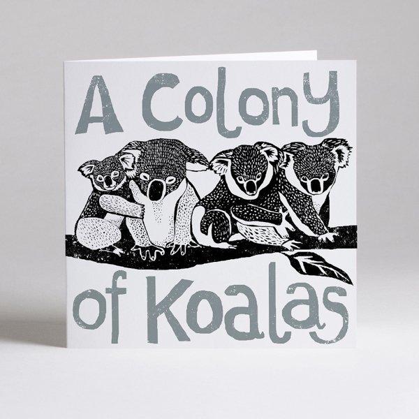 Colony of koalas