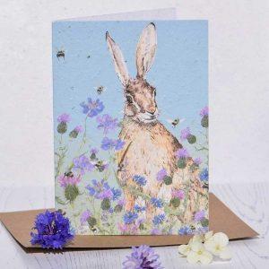 hare-seedcard
